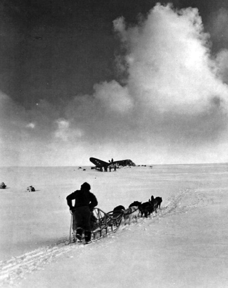 World-War II Dog Rescue Mission