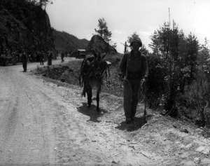 A U.S. Marine leads his ammunition bearing mule during the Korean War, May 28, 1951. U.S. Marine Corps Archives & Special Collections photo