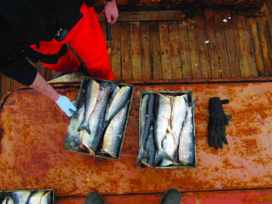 fisheries enforcement