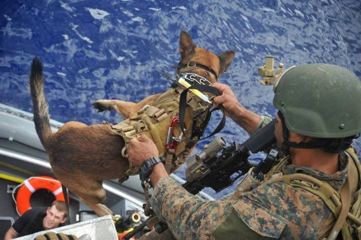 Multi-purpose canines go places most dogs – or people – don't and can't tread. Here, a special operations dog handler lowers one of these incredible dogs into a rigid-hulled inflatable boat set to depart the littoral combat ship USS Independence. United States War Dogs Association Facebook page