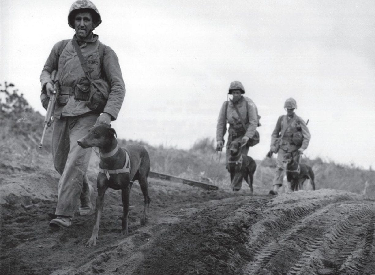 Members of a Marine Corps war dog platoon move up to the front lines on Iwo Jima. The dogs were a great asset due to their ability to ferret out enemy snipers and to act as speedy messengers. U.S. MARINE CORPS HISTORICAL CENTER