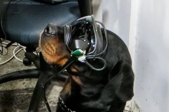 AR Dog Goggles Military Working Dog