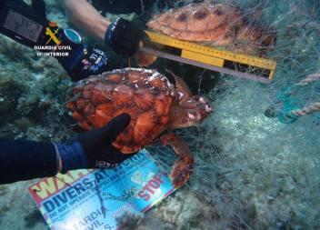Localitzades dues tortugues mortes atrapades en una xarxa de pesca abandonada en aigües de Cala Rajada