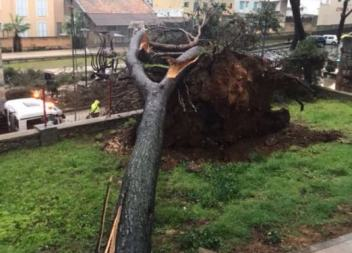 Cauen dos pins a Artà