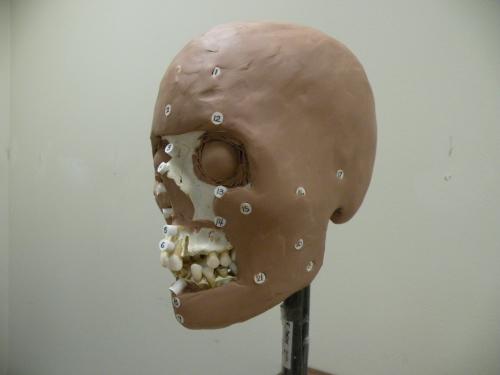 Ken Lang - skull reconstruction