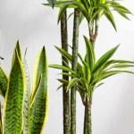 Top 10 Luftreinigende Zimmerpflanzen Dehner