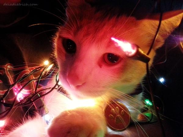O Natal está chegando