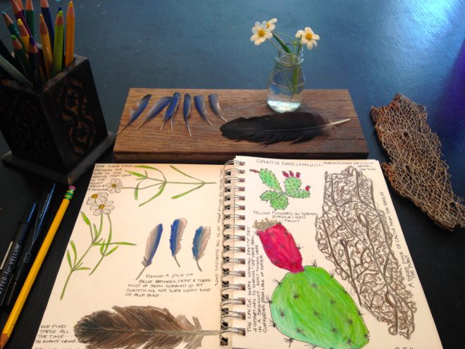 Nature Book ideas for Homeschool