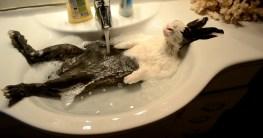 bunny nimmt ein bad