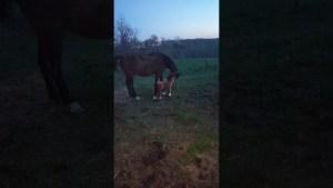 erzaehl mir nix vom pferd