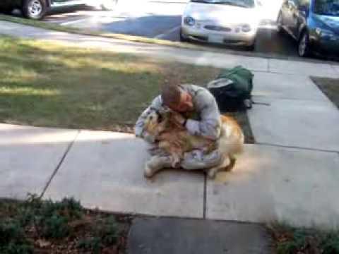 hund freut sich ueber rueckkehr