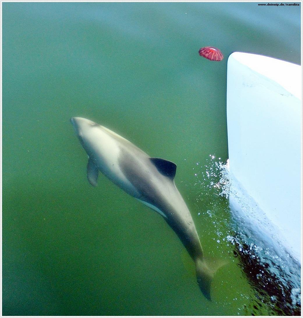 namibia delfin walfischbucht