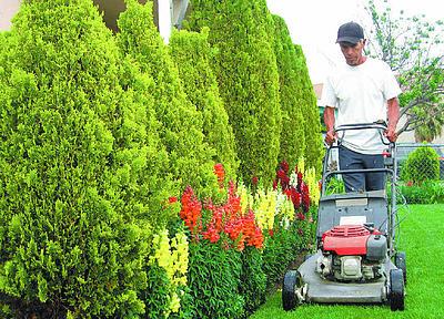 Jardineros cobran menos que trabajadores municipales