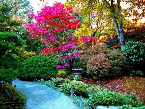 arboles en jardineria