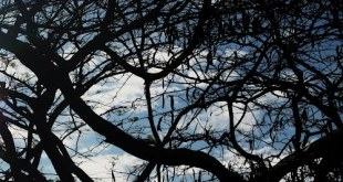 Cómo identificar los árboles en invierno