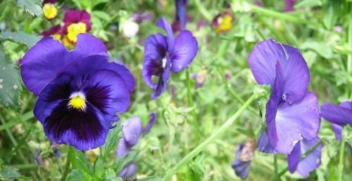plantas para sembrar en tu jardín