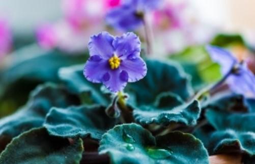 fertilizantes para flores