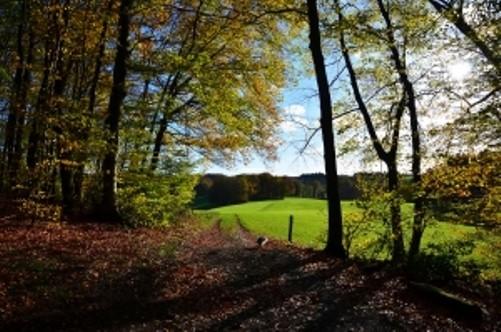 Ideas de Arboles Para el Jardin Delantero