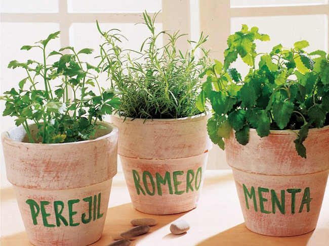 Hierbas aromáticas