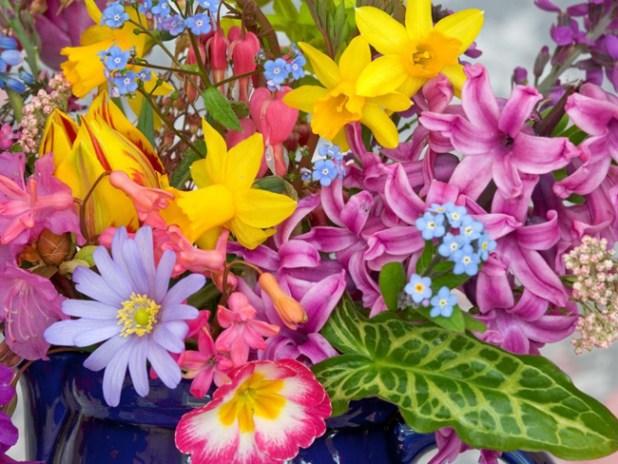 Flores para clima cálido