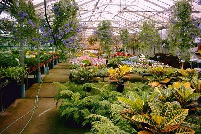 Tips para jardineros principiantes for Adornos de jardineria