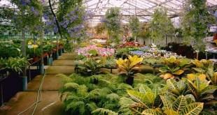 Tips para jardineros principiantes