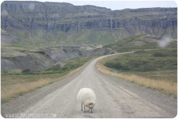 ruta 1 ring road islandia