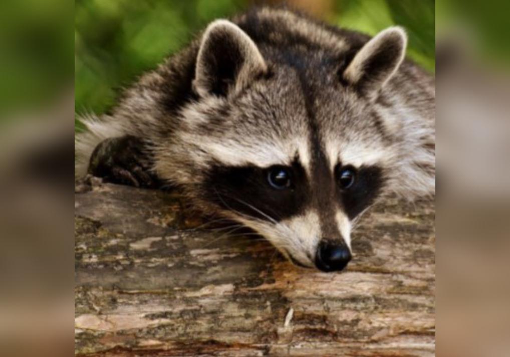 Exotic Animals: Thursday, June 24