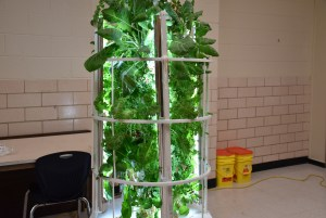 stoneview indoor aquaponics plant