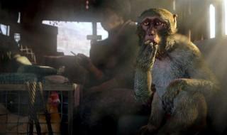 Far Cry 4 o GTA V entre las ofertas de la semana de Xbox Live
