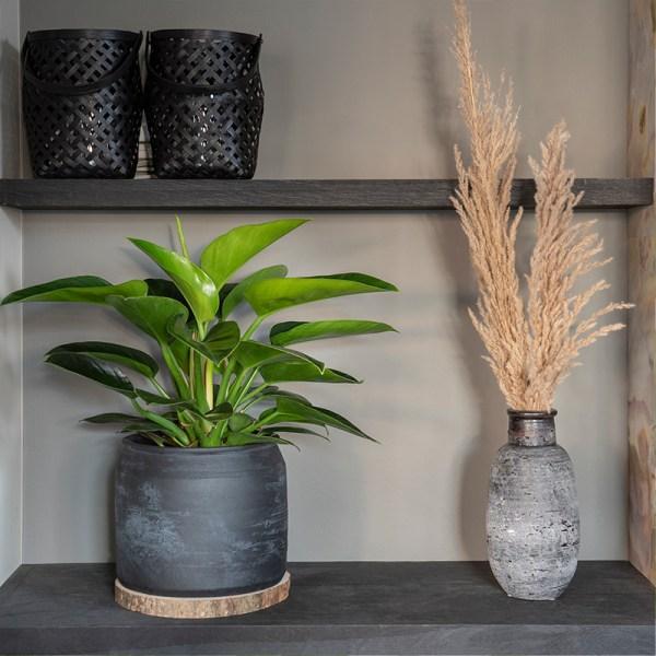 Dekbed Discounter Philodendron 'Congo Groen' accessoire: siermand