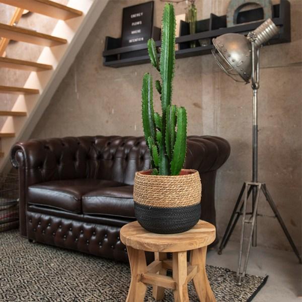 Dekbed Discounter XL Cowboy Cactus 'Euphorbia Acrurensis' Voeding: Met plantenvoeding