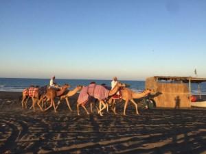 camel-drive