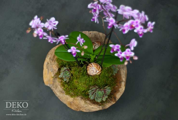 DIY Orchideen effektvoll dekorieren  DekoKitchen
