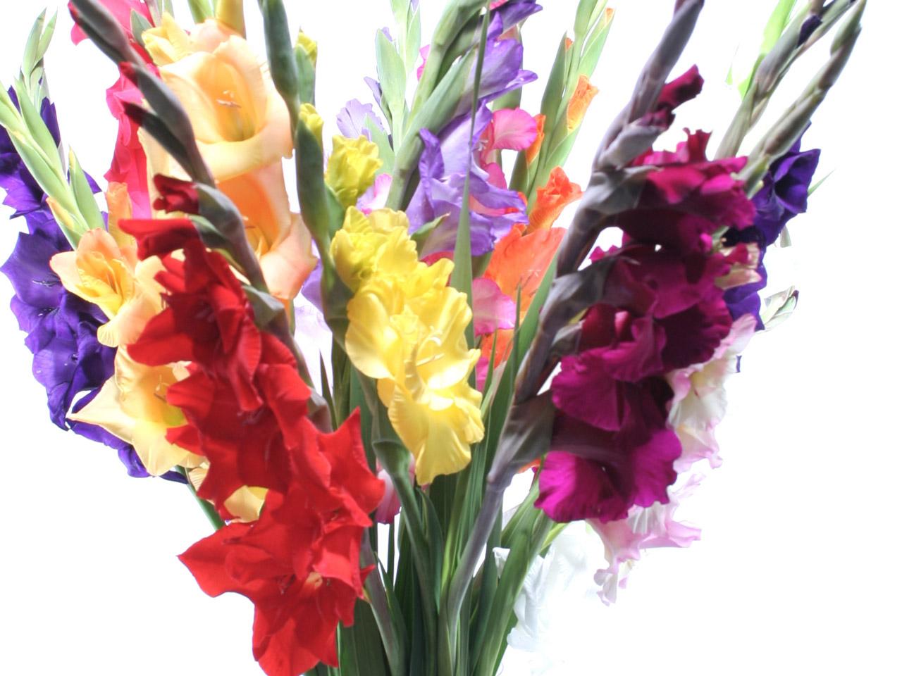 Blumen nach Jahreszeit  Schnittblumen fr jede Saison