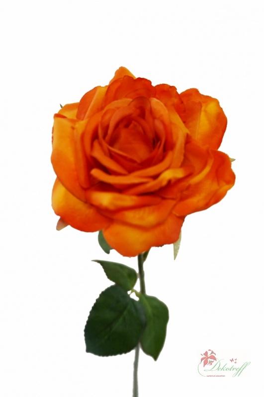 Orange Rosen Bedeutung die rosenfarbe bedeutung