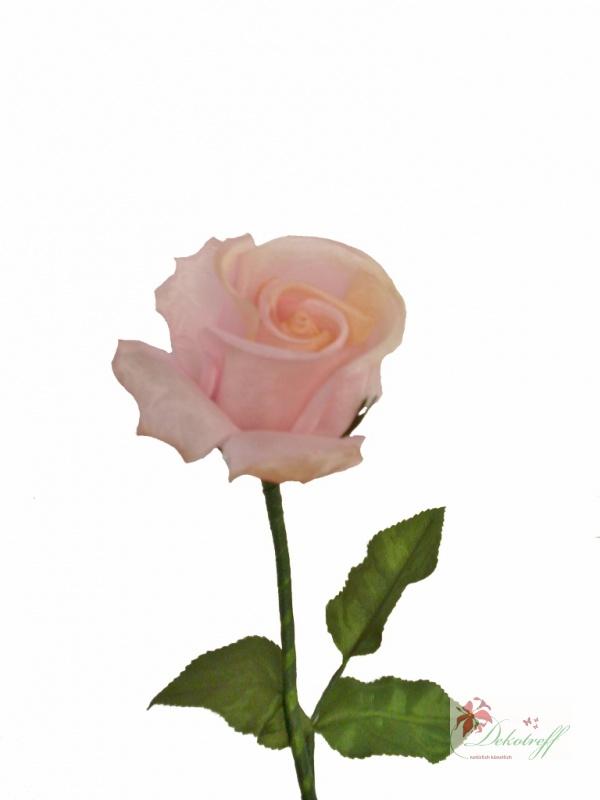 Rosa Rosen Bedeutung blumen zum valentinstag verschicken