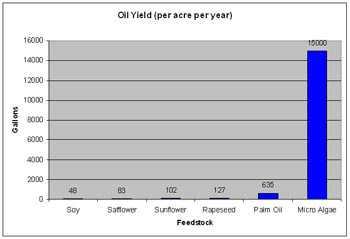 Olieopbrengst per hectare