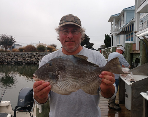 maryland state rocord, grey triggerfish