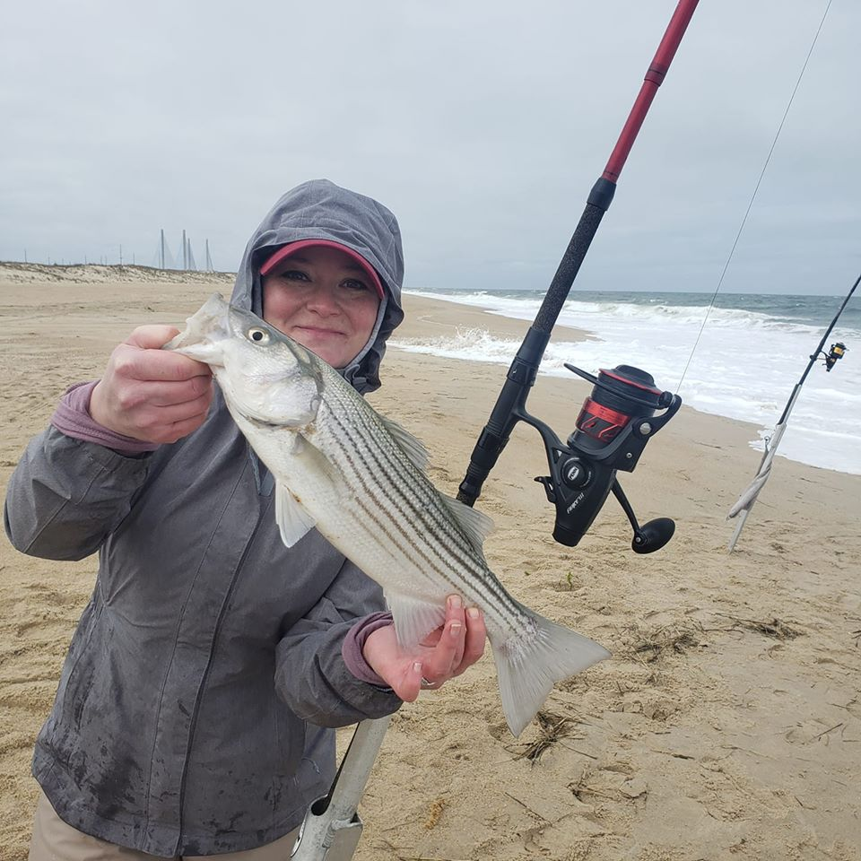 short striped bass, delaware surf fishing, 3Rs, delaware seashore state park,
