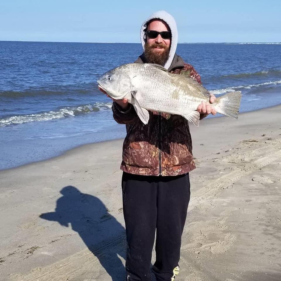 black drum, beach plum island state park, delaware surf fishing, sussex county, lewes, broadkill beach