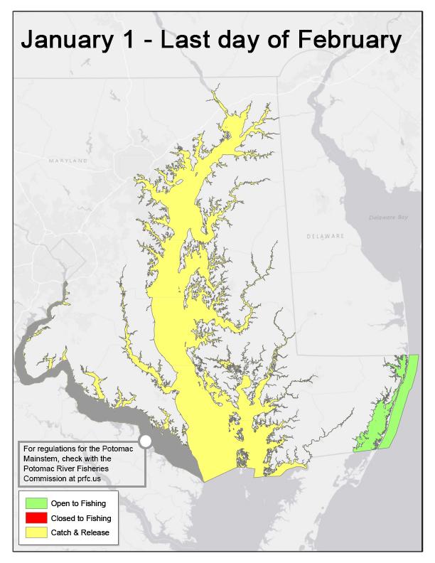 Chesapeake Bay STRIPED BASS REGULATIONS 2020