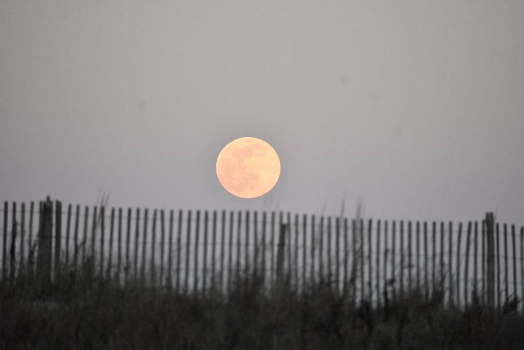 pink moon, delaware surf fishing,