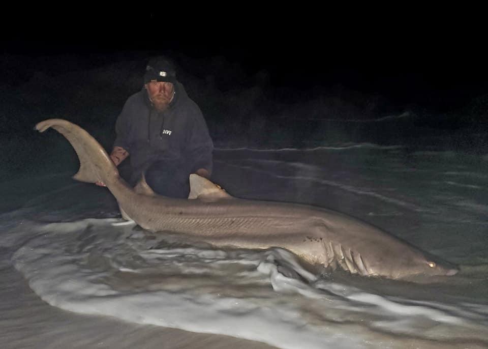 assateague, sand tiger shark, tax man, the man in the grey suit