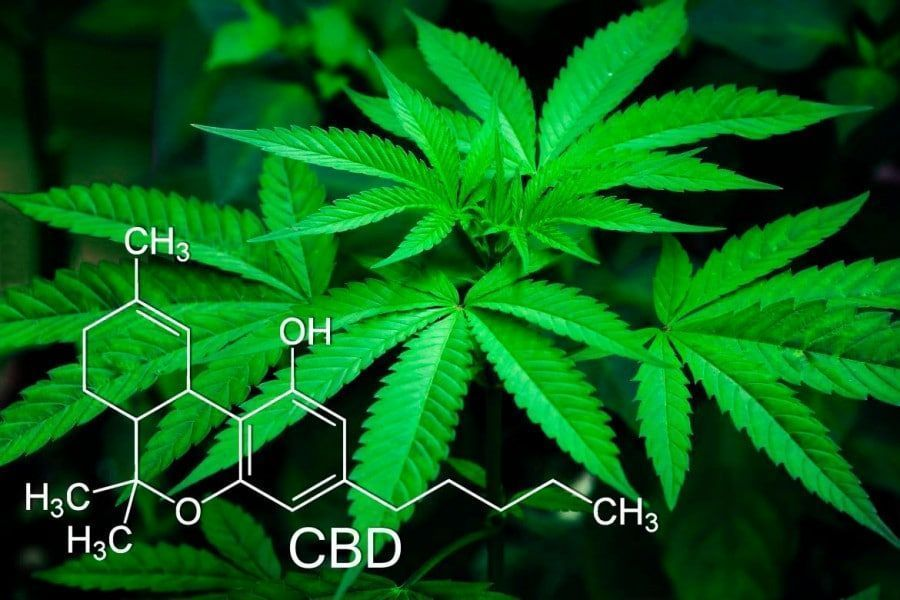 DEL CINE AL HOSPITAL Cannabis y esquizofrenia: la verdad sobre los porros que nos desvela la Medicina.