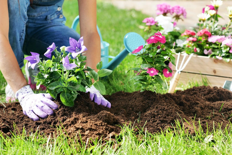 Trädgårdsskötsel