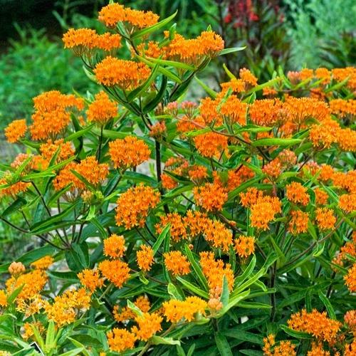 Top 20 Perennials For Every Garden Delhi