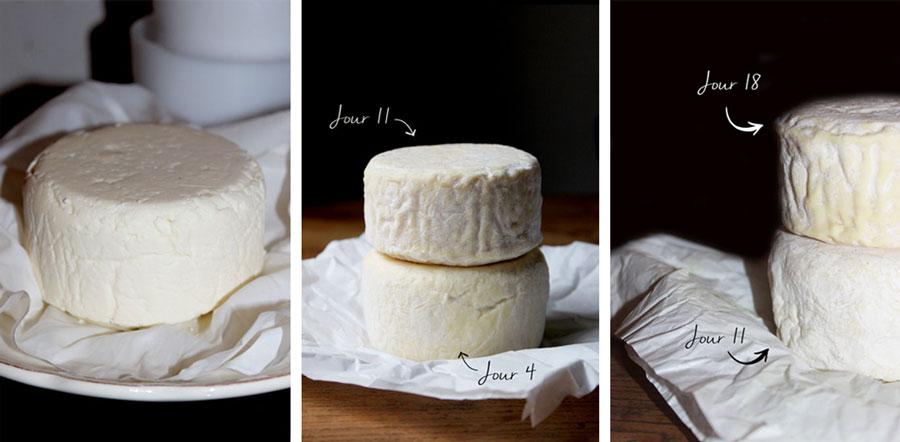 fromage-tommette-maison