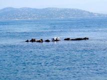 The wild beauty of Saint Tropez