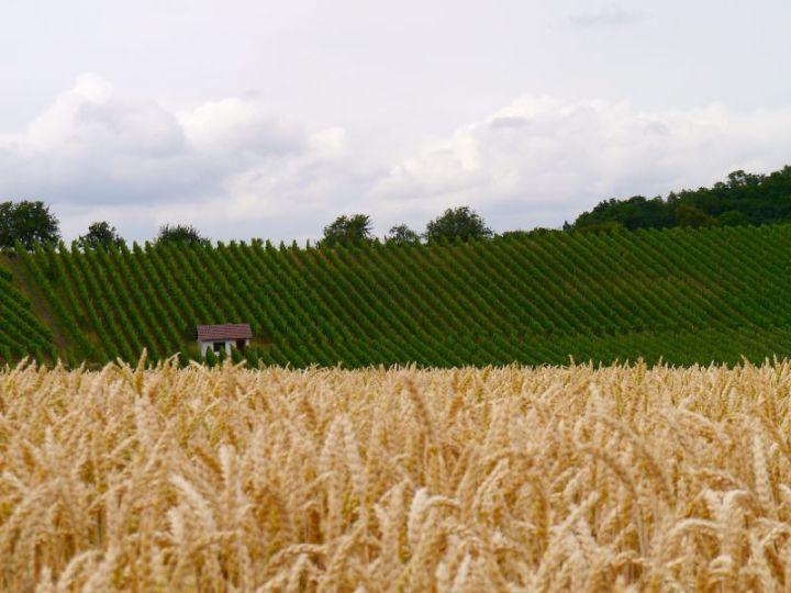 Abwechslungsreiche Radtour: Weizen und Weinberge bei Bretzfeld